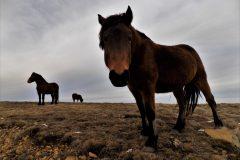 konj Stolovi