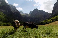 krave na Prokletijama