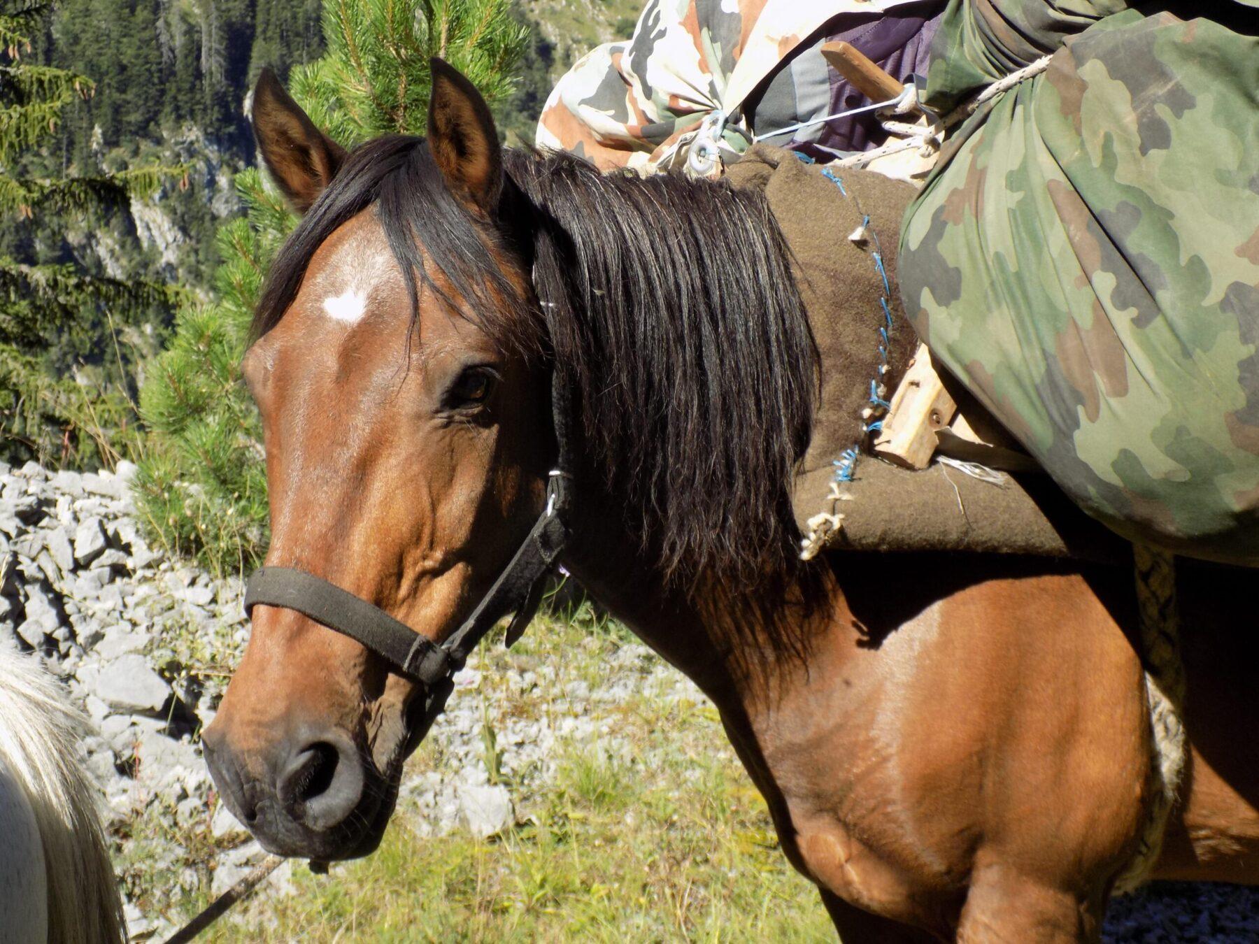 Nacionalni park Sutjeska