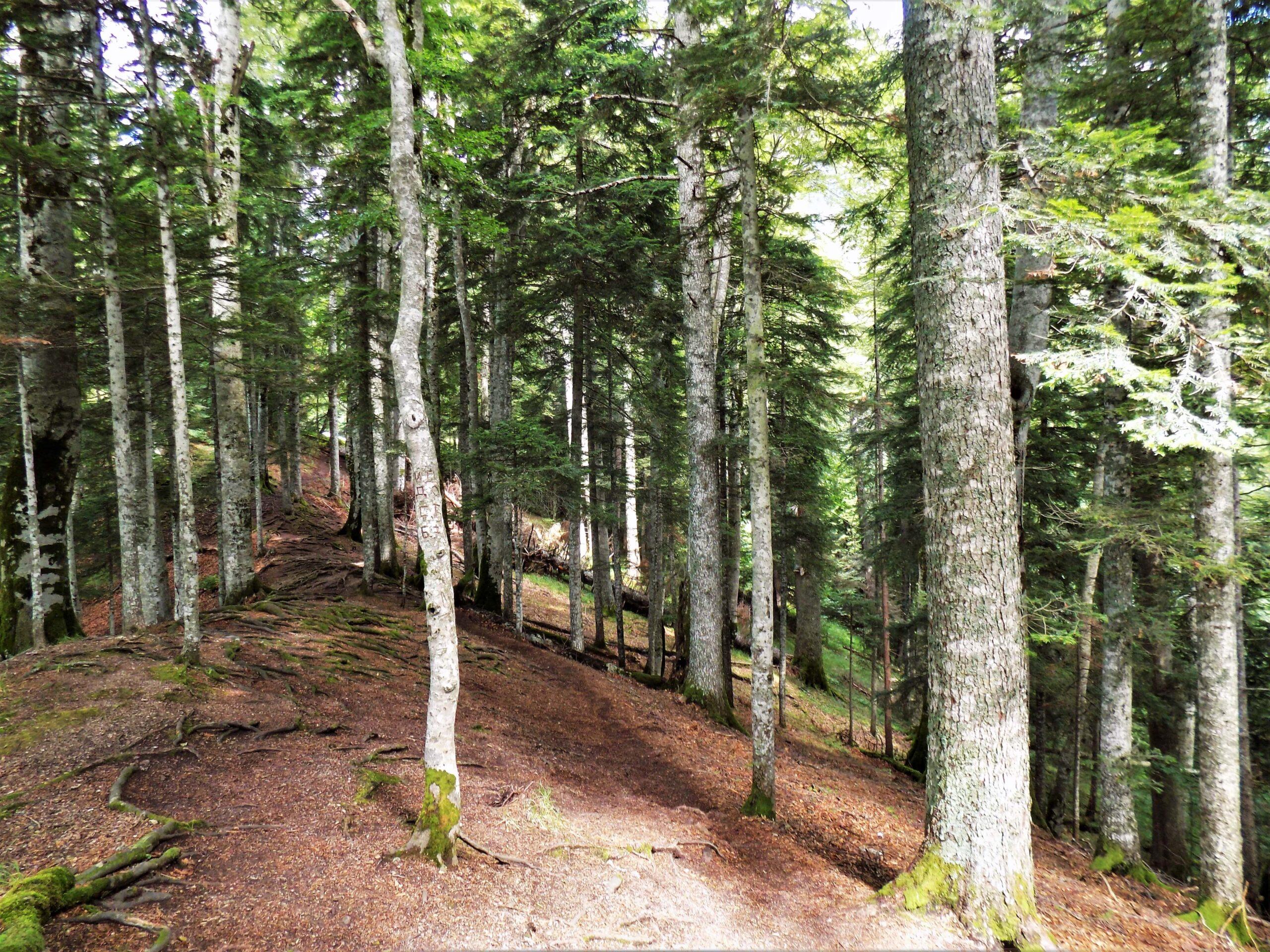 Prašuma Perućica - Nacionalni park Sutjeska