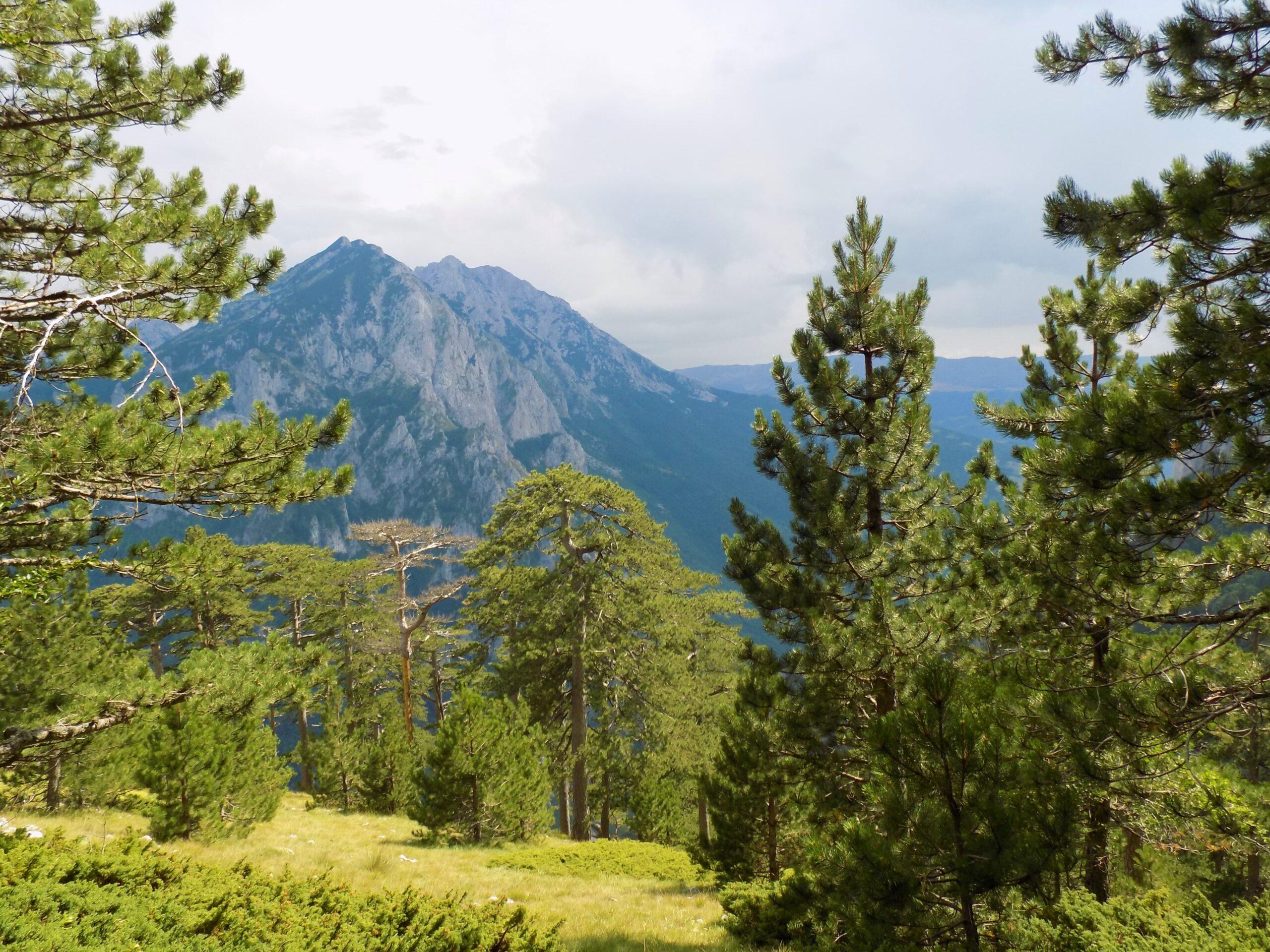 Vidikovac Borić - Nacionalni park Sutjeska